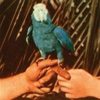 andrew bird serious